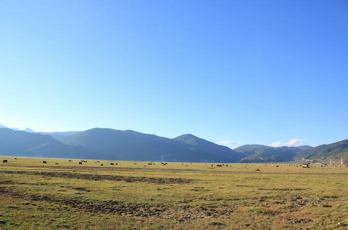 Yak Plateau of Lijiang is a typical pasture accompanied with Yuloong snow mountain, crystal Heishui River and dense primeval forest.