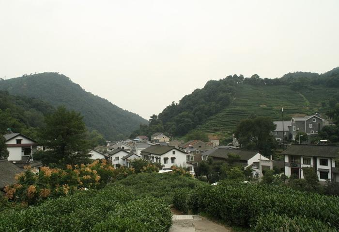 Dragon Well Tea Plantation is a picturesque wonderland surrounded by mountains with a large area of tea trees.