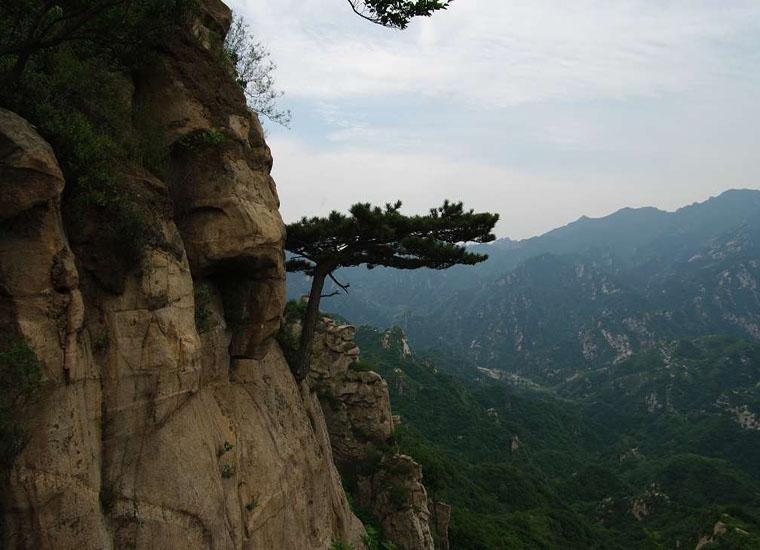 Guest-Greeting Pine Grew on Cliff of Taoyuan Fairy Valley Scenic Area in Beijing