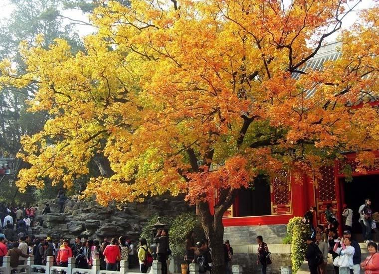 Xiangshan Park in Beijing is Particularly Beautiful in Autumn