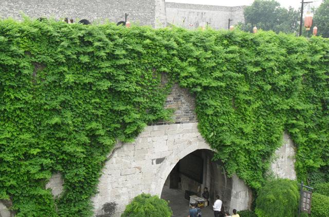 The green-covered city wall