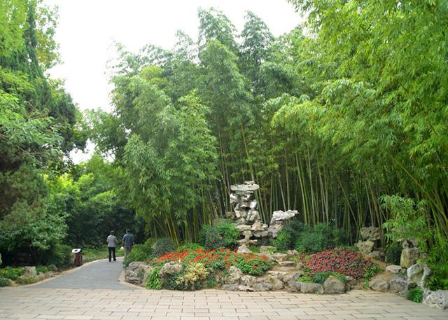 Bamboo are widely planted in Ge Garden.
