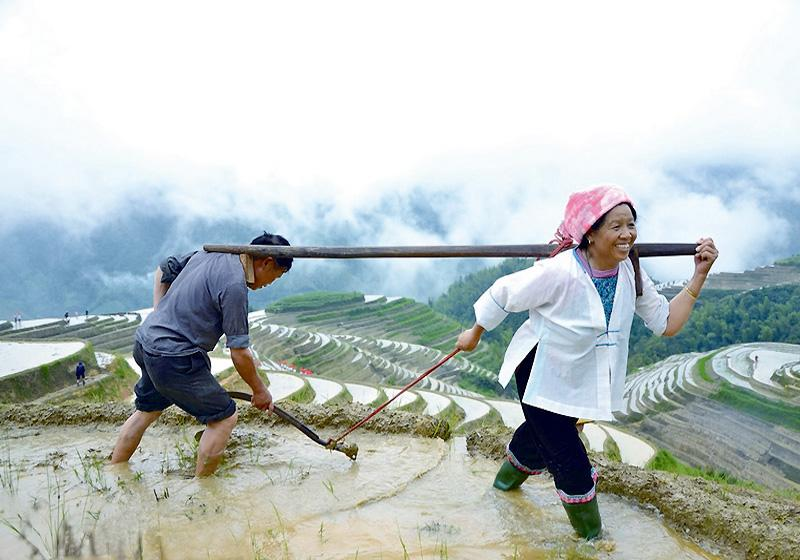 The Zhuang people in Ping'an Village of Guilin's Longsheng County work in the fields