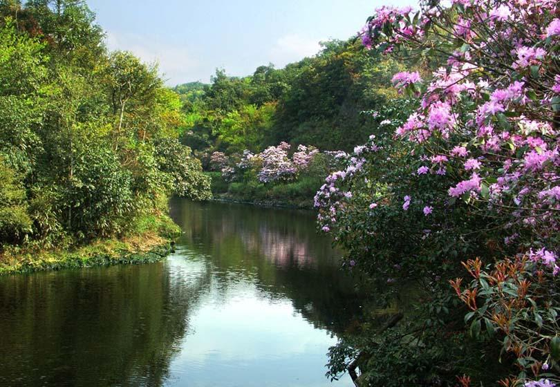 Daming Mountain in Nanning is gorgeous with azaleas in spring