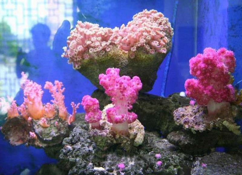 Corals in Aquatic Products Museum of Beihai, China