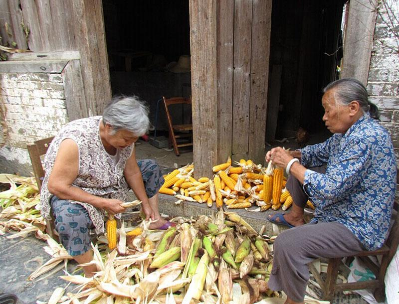 Locals shell corns in Huangyao Ancient Town of Hezhou, China's Guangxi Province