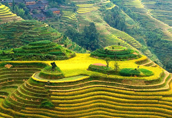 7 Days Hong Kong-Guilin-Hong Kong Tour with Wonders of Dragon's Backbone Rice Terraces