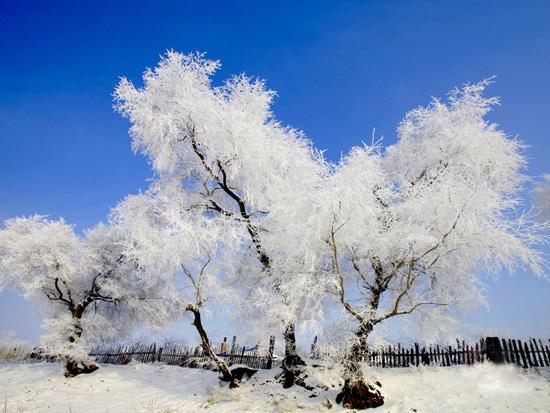5 Days Harbin Ice & Snow World with Historical Northeast China Tour