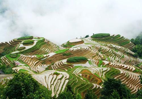 Dragon Back Rice Terraces
