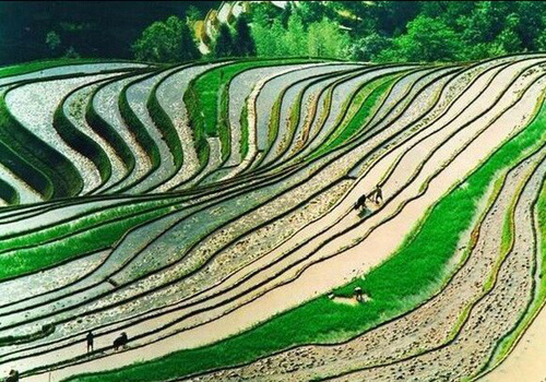 Longji Rice Terraces in China
