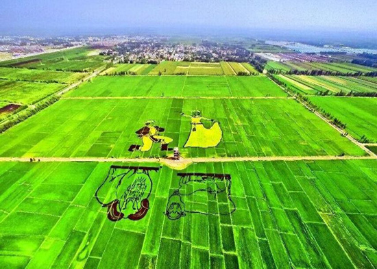 Paddy field painting seen in China's Xinjiang