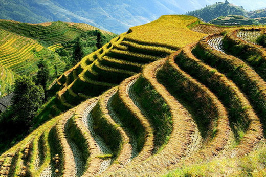 Longji,Dragon's Backbone Rice Terraces,Longsheng Tours,Guilin Tours,China Tours