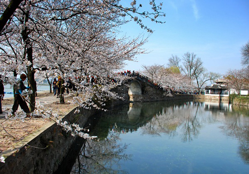 best places to enjoy cherry blossom in china  china travel