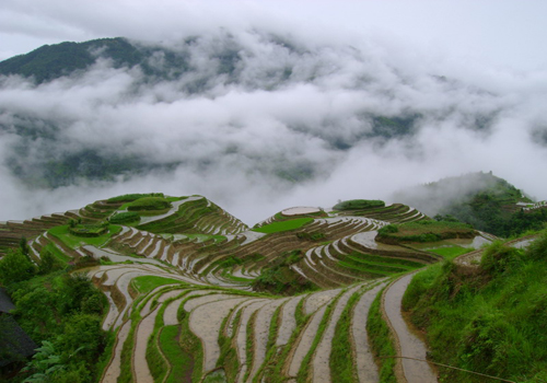 Dragon's Backbone Rice Terraces,Guilin