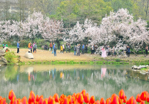 Tourists enjoy cherry blossoms at West Lake in Hangzhou