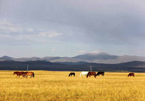 Gannan Grasslands in China's Gansu