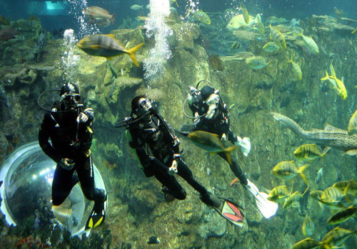 Visitors get into close touch with fish in HK Ocean Park