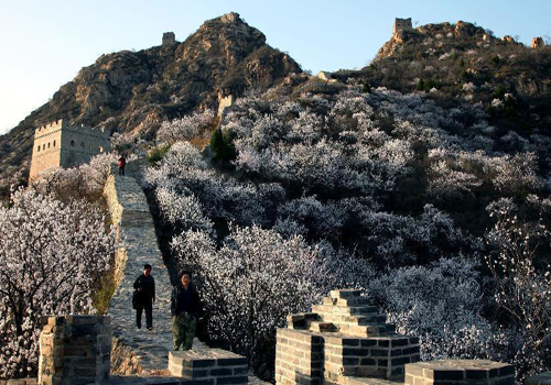 Trees in blossom along Great Wall