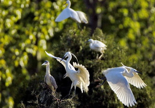 White egrets seen at Tianmahu scenic resort in N China