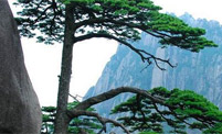 China Huangshan Tour picture