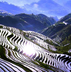 Longsheng Dragons Backbone rice Terraces, Guilin