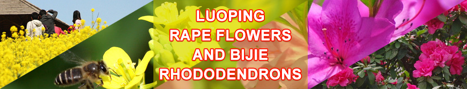 Luoping Rape Flowers