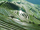 Rice Terraces of Guilin, Longsheng County