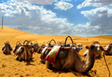 silk road and Camels, the history and future
